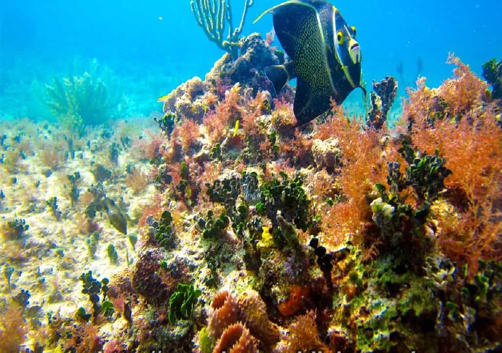 scuba diving in playa del carmen