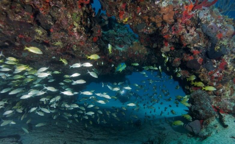 Swimthrough at Moc Che Shallow in Playa del Carmen